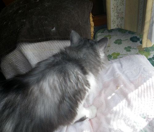 逃げ場所は猫ちぐら(^^)v Huuのゴロンゴロン_a0136293_1683387.jpg