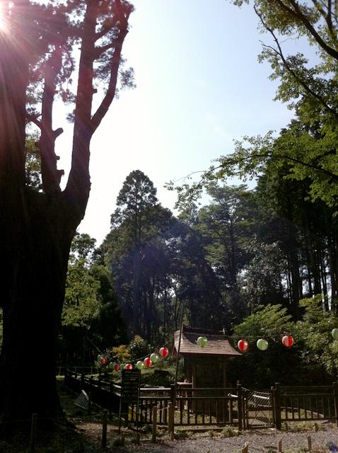 夏休み_e0174203_2194067.jpg