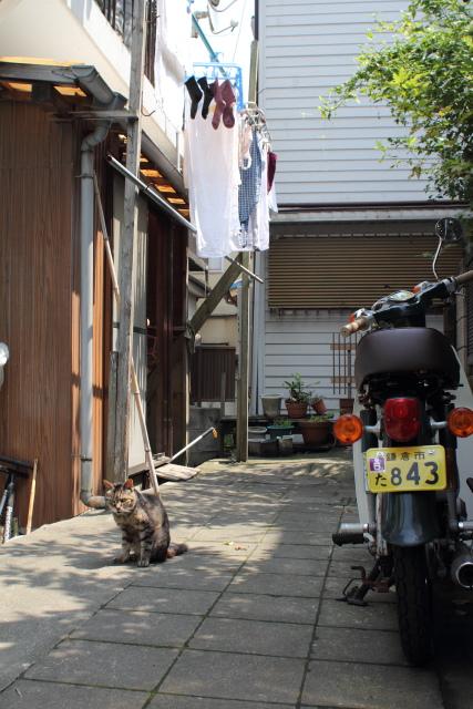 江ノ島  湘南のマルフク_b0061717_411937.jpg