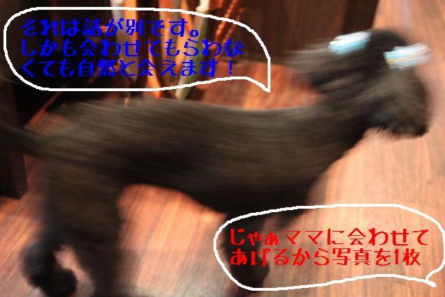 b0130018_819252.jpg