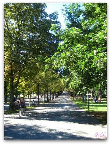 秋晴れの日曜日、ジュネーブを走る_b0168823_1525031.jpg