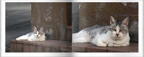 猫と柘榴_c0026824_1733965.jpg