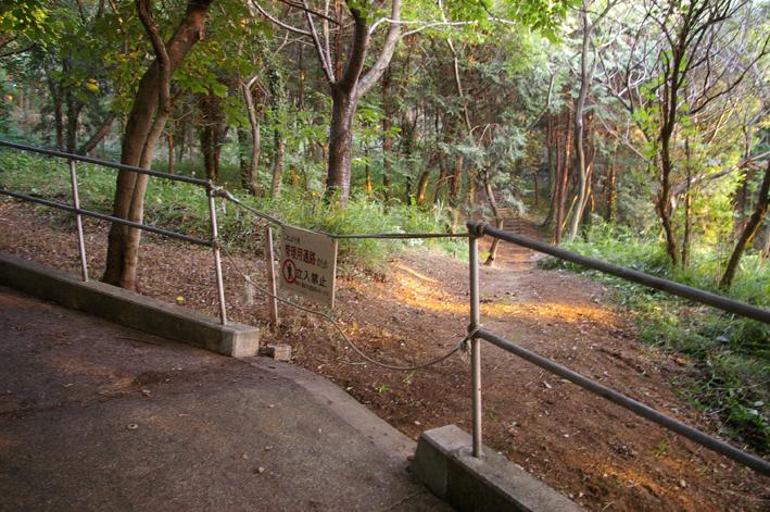 下草刈りで六国見山森林公園の散策がより快適に_c0014967_18485188.jpg