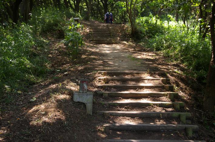 下草刈りで六国見山森林公園の散策がより快適に_c0014967_1850352.jpg