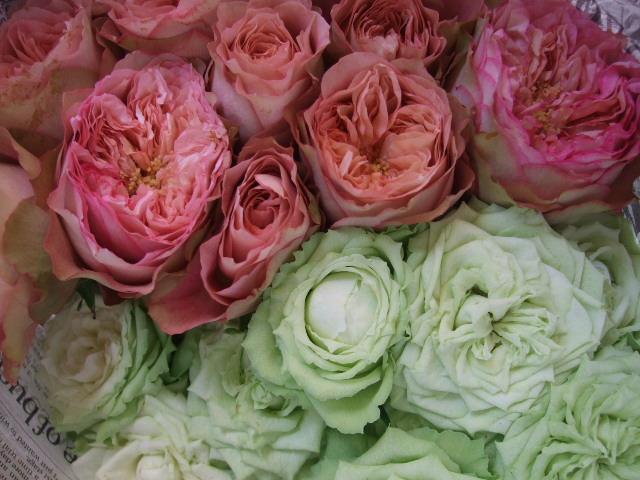 オークリーフ(アンティークテイストのバラ)_f0049672_17391449.jpg
