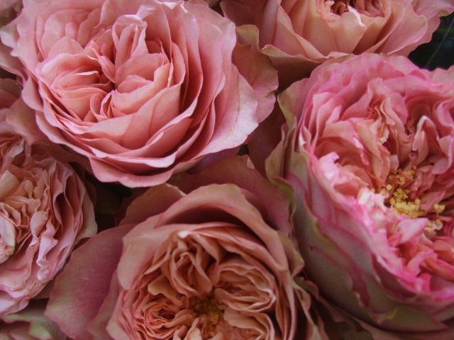 オークリーフ(アンティークテイストのバラ)_f0049672_17392917.jpg