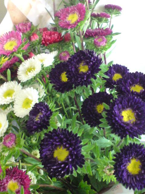 珍客かぶとむしと花火みたいなアスターの花。_d0182179_16484796.jpg