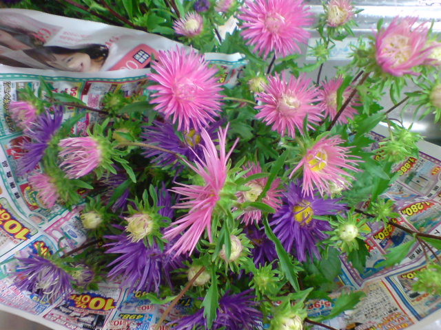 珍客かぶとむしと花火みたいなアスターの花。_d0182179_16492596.jpg