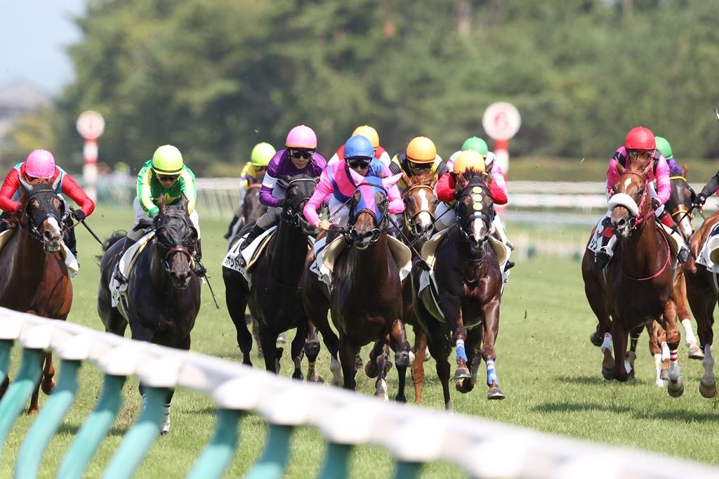 2011年8月28日 新潟記念_f0204898_1165994.jpg