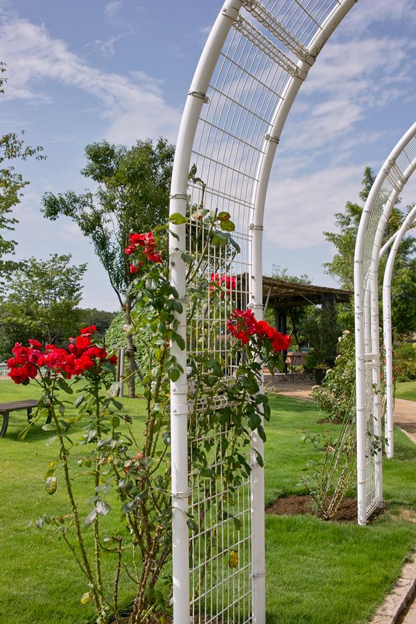 夏のDP2x スナップ(後編) ゆいの花公園_c0223825_6405117.jpg