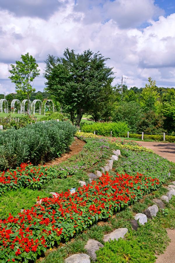 夏のDP2x スナップ(後編) ゆいの花公園_c0223825_6544827.jpg