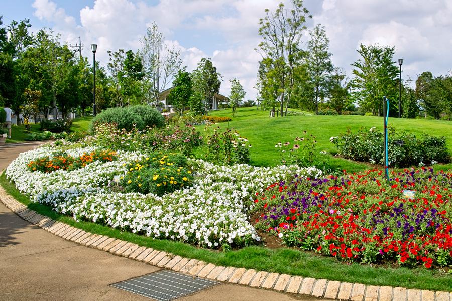 夏のDP2x スナップ(後編) ゆいの花公園_c0223825_704019.jpg