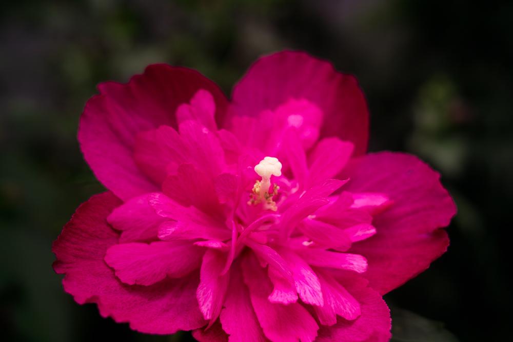 夏のDP2x スナップ(後編) ゆいの花公園_c0223825_7244440.jpg