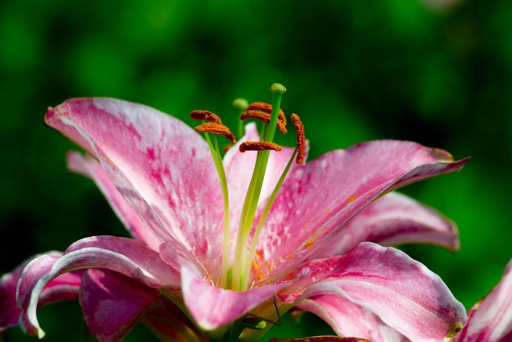 夏のDP2x スナップ(後編) ゆいの花公園_c0223825_7483228.jpg