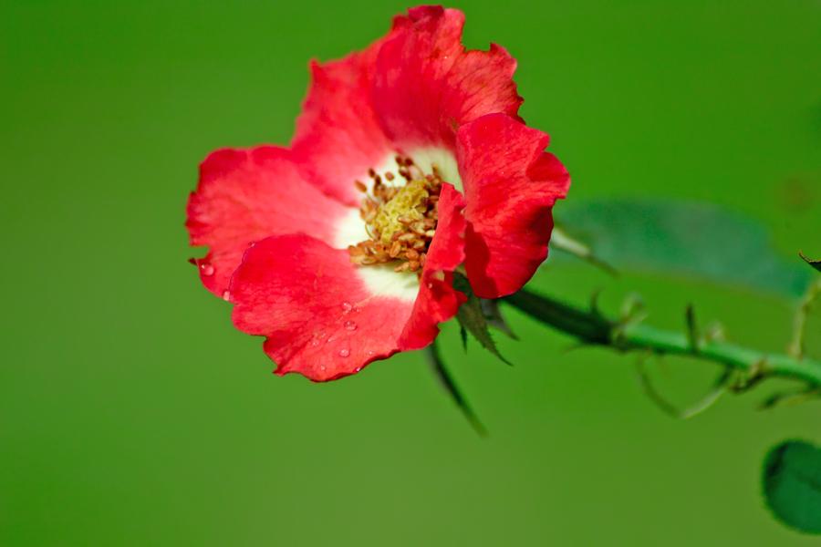 夏のDP2x スナップ(後編) ゆいの花公園_c0223825_7505350.jpg