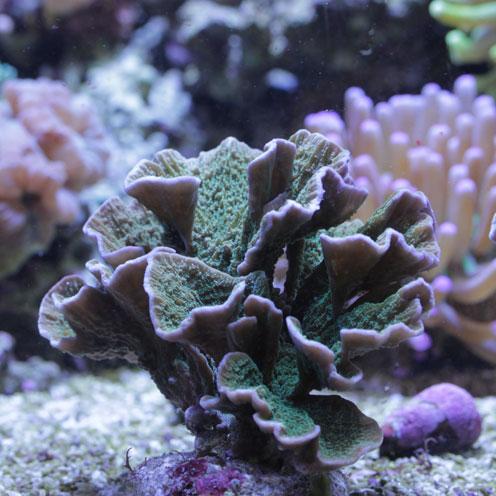 サンゴ充実!!_d0221436_193017100.jpg