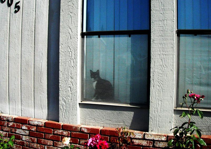 飾り窓の...おんな。_c0119140_1451537.jpg
