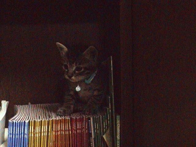 仔猫と暮らす。_e0060555_22473086.jpg