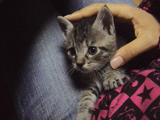 仔猫と暮らす。_e0060555_22494364.jpg