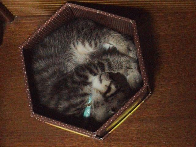 仔猫と暮らす。_e0060555_22515271.jpg