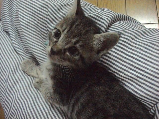 仔猫と暮らす。_e0060555_2254511.jpg