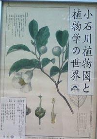 小石川植物園と植物学の世界/東京大学 駒場博物館_a0094959_20384317.jpg