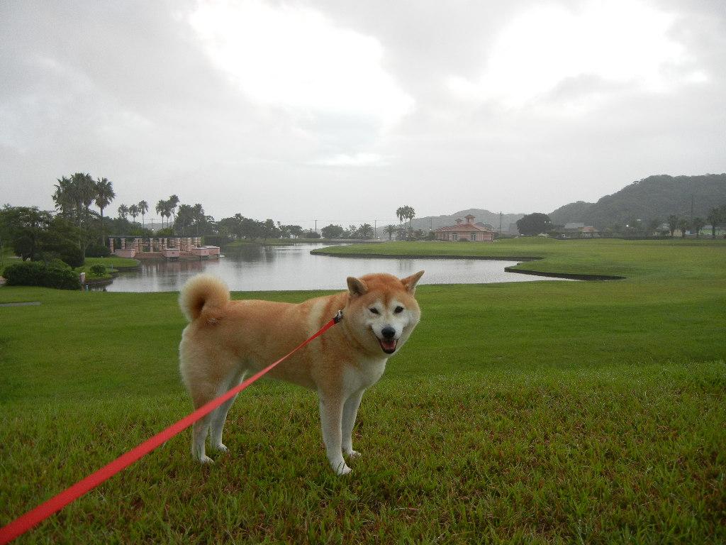 2011年8月30日(火)台風の前!_f0060461_11222391.jpg