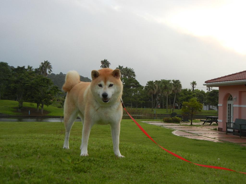2011年8月30日(火)台風の前!_f0060461_11232261.jpg