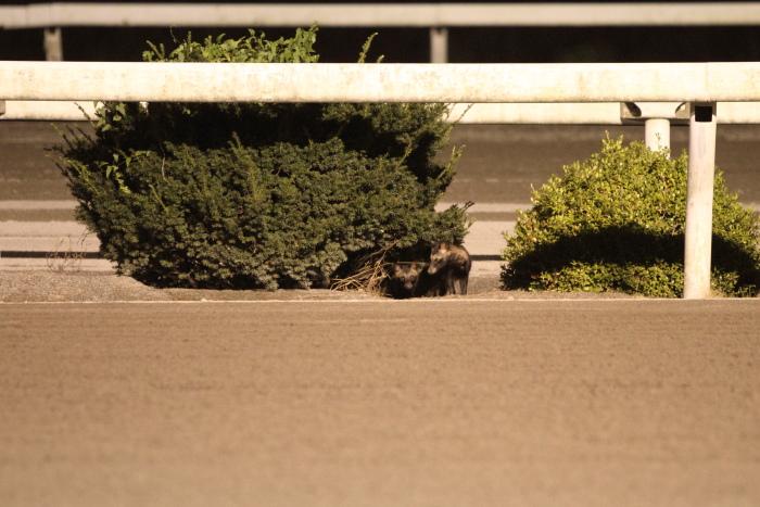 2011年8月27日(土) 高知競馬 8R 第81回葉月頼母特別 B-3選抜馬_a0077663_932680.jpg