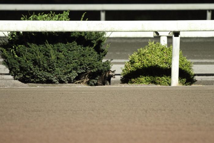 2011年8月27日(土) 高知競馬 8R 第81回葉月頼母特別 B-3選抜馬_a0077663_93926.jpg