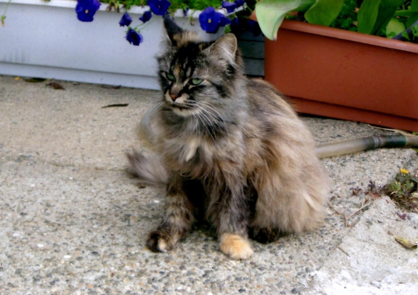 171. 猫_e0233674_6143542.jpg