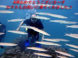 f0144385_2335816.jpg