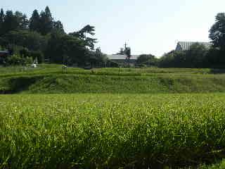 川崎から小淵沢の田んぼの間に移住して・・・体調は・・_a0211886_9532759.jpg