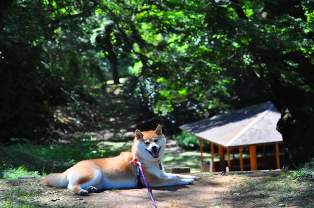 最後の夏休み_a0126590_23292975.jpg