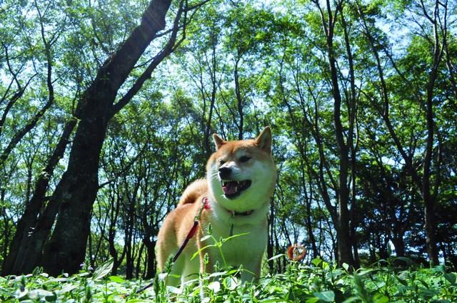 最後の夏休み_a0126590_235799.jpg