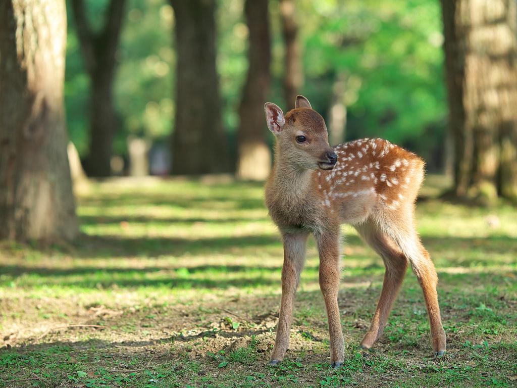 「奈良公園の鹿 その2」_a0133692_17301194.jpg