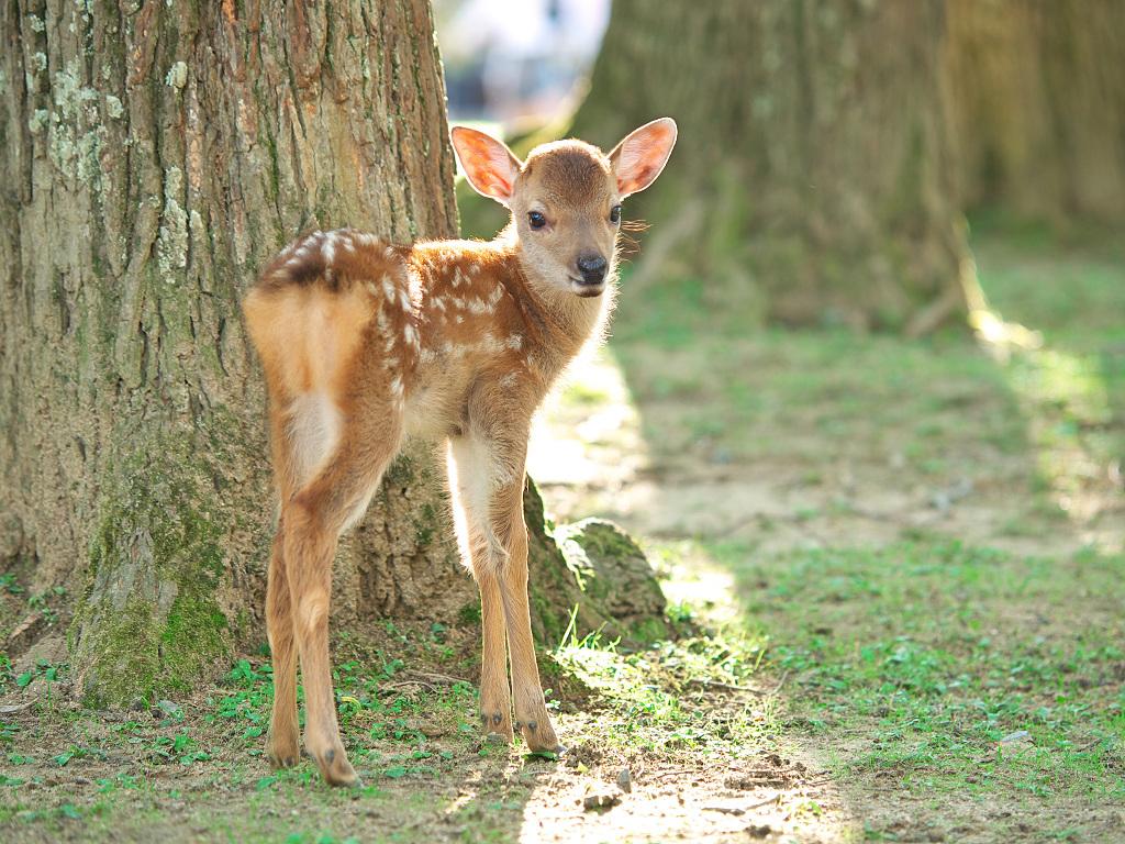 「奈良公園の鹿 その2」_a0133692_17311378.jpg