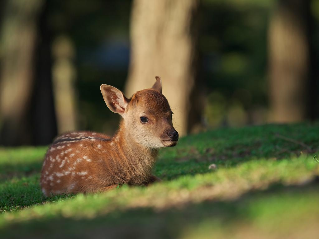 「奈良公園の鹿 その2」_a0133692_1732147.jpg