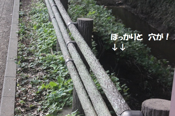 f0186509_12345772.jpg