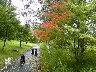秋が始まったよ_f0148927_15371339.jpg