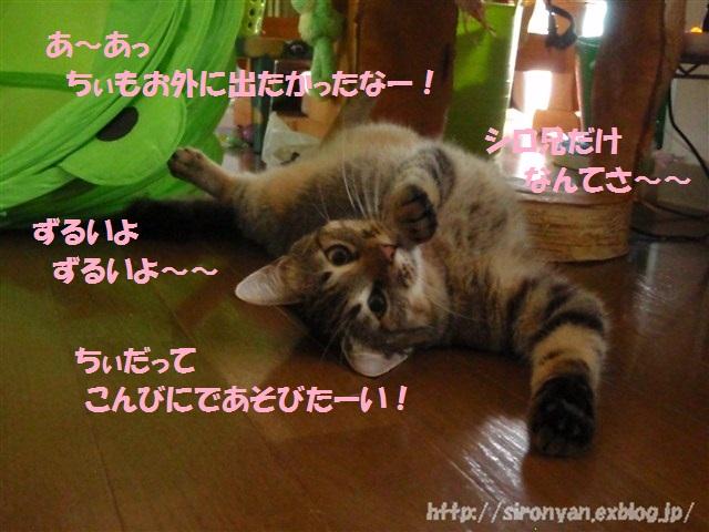 a0159490_151527.jpg