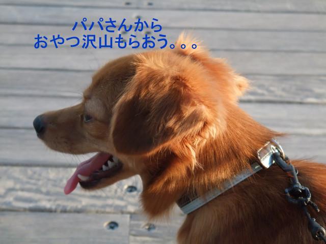 b0203596_1533196.jpg