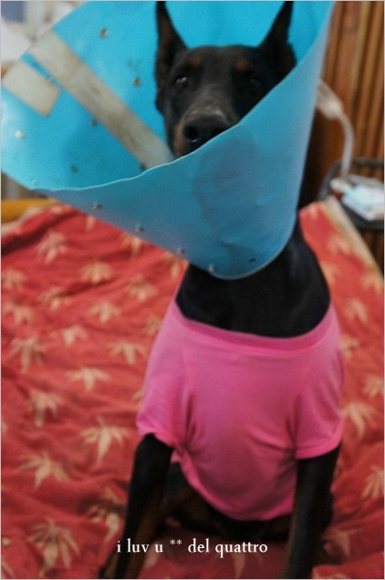 犬の常同行動_a0204003_15472881.jpg