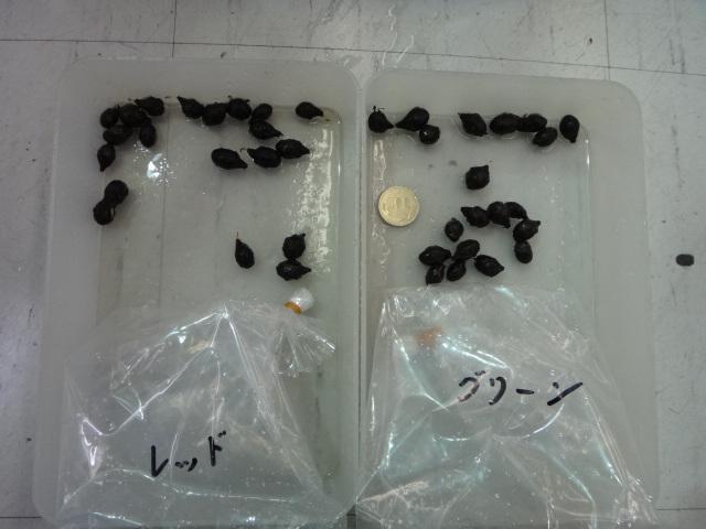 熱帯魚・水草・金魚_f0189122_13483994.jpg