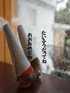 ハナゲたいふうの「め」_d0196124_1791511.jpg
