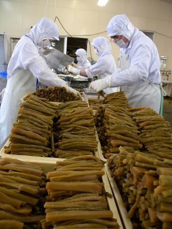 山菜加工場へようこそ(山ウド編)_b0206037_1435582.jpg