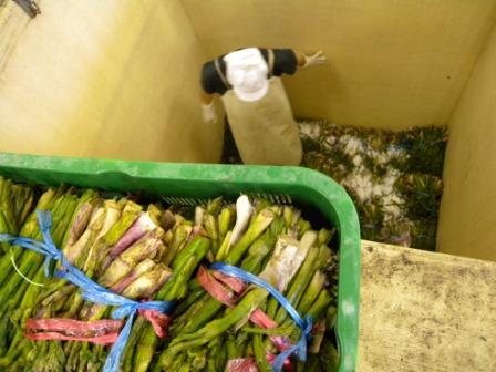 山菜加工場へようこそ(山ウド編)_b0206037_14435634.jpg