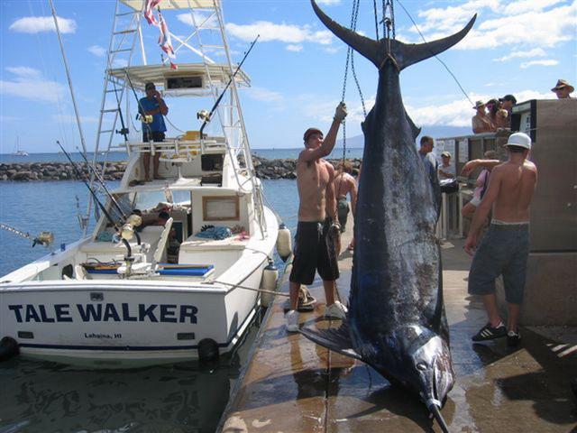 海には出られませんが、巨大魚の夢でも・・・ 【カジキ・マグロトローリング】_f0009039_10464582.jpg