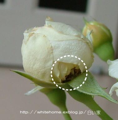 d0232840_115137.jpg