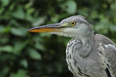 ★先週末の鳥類園(2011.8.27~28)_e0046474_1255159.jpg